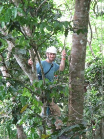 Working in the canopy